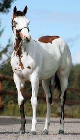 Midas Foal 13.jpg