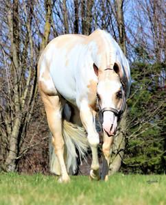 precision-horse-training-Midasized12.jpg