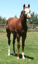 Midas Foal 10.png