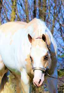 precision-horse-training-Midasized13.jpg