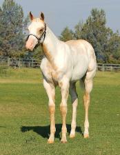 Midas Foal 8.png
