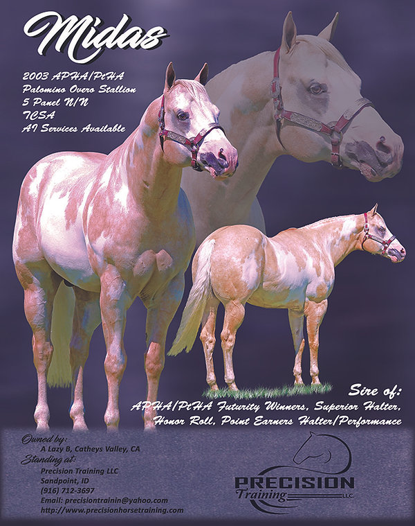Midas APHA - PtHA Palomino Overo Stallion.jpg
