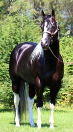 lasting-masterpiece-stallion-7.JPG