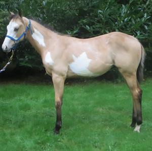 Midas Foal 1.jpg