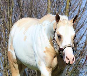 precision-horse-training-Midasized6.jpg