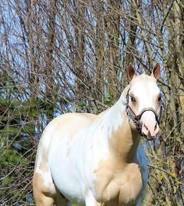 precision-horse-training-Midasized10.jpg