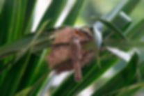 A bird with its nest..jpg