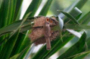 A bird with its nest..jpg