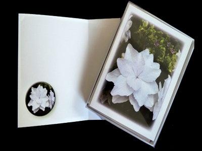 White Gardenia Note Cards