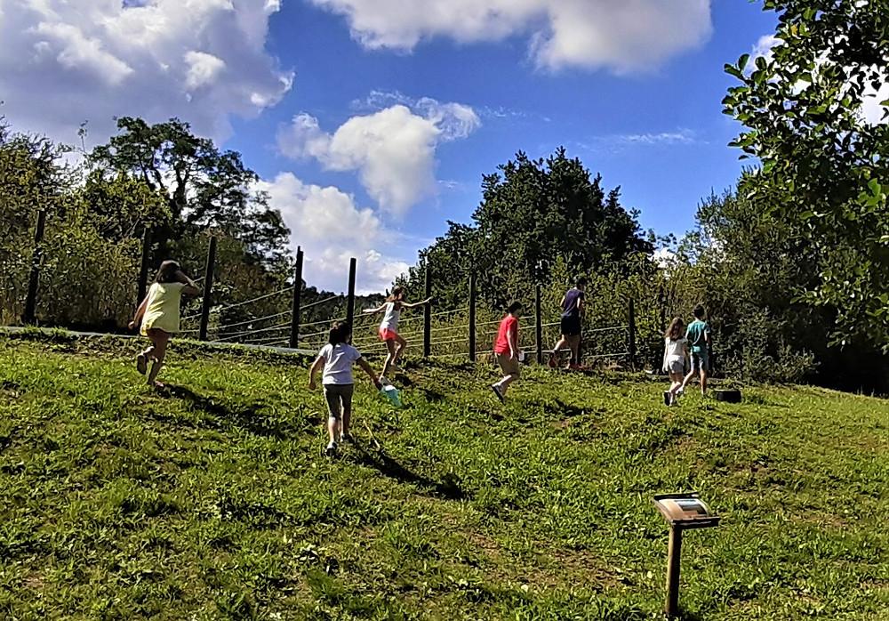 actividades en zonas verdes