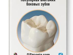 Понятная анатомия боковых зубов  DZirconia.com 8-960-255-2711