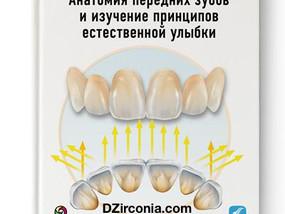 Анатомия передних зубов и изучение принципов естественной улыбки DZirconia.com
