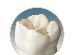 Понятная анатомия боковых зубов