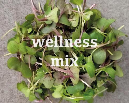 wellness+mix+web.jpg