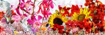 Wiesenzauber, Poster mit Blumen