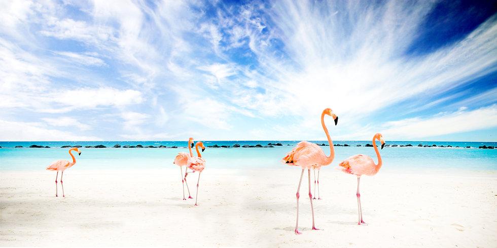 zu sehen sind Flamingos an einem weißen Strand mit blauem Himmel. Das Bild ist 2008 in Stuttgart entstanden und wurde mit einem Bildbearbeitungsprogramm erstellt.