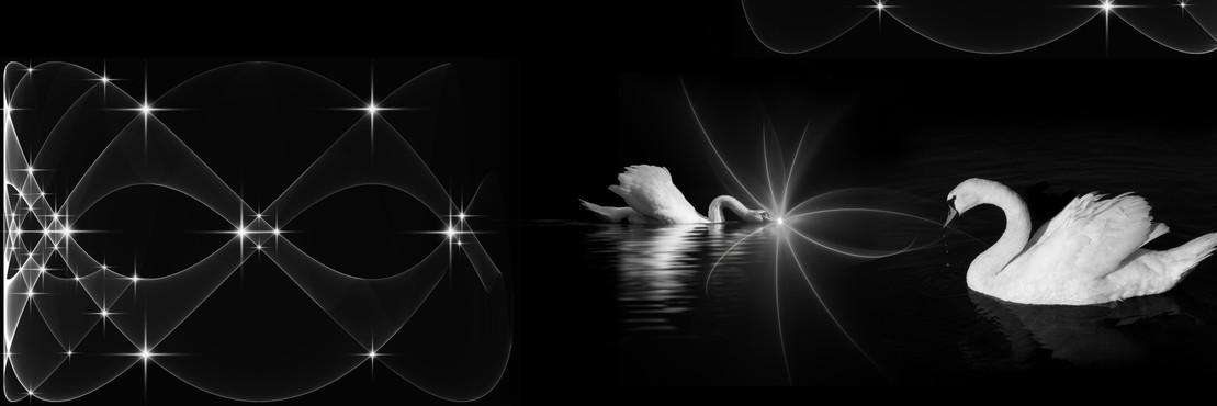 Schwanenliebe auf einem schwarzen See