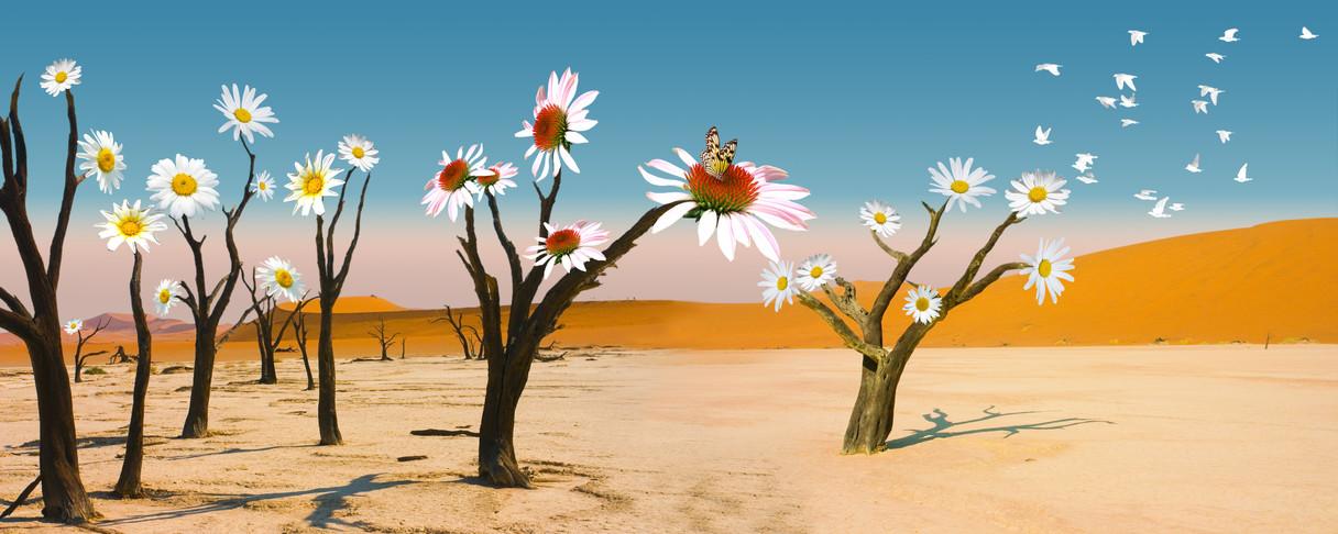 """Poster mit dem Namen """"Wüste"""", Kunstdruck"""