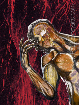 After Rodin. Muscles of the human body