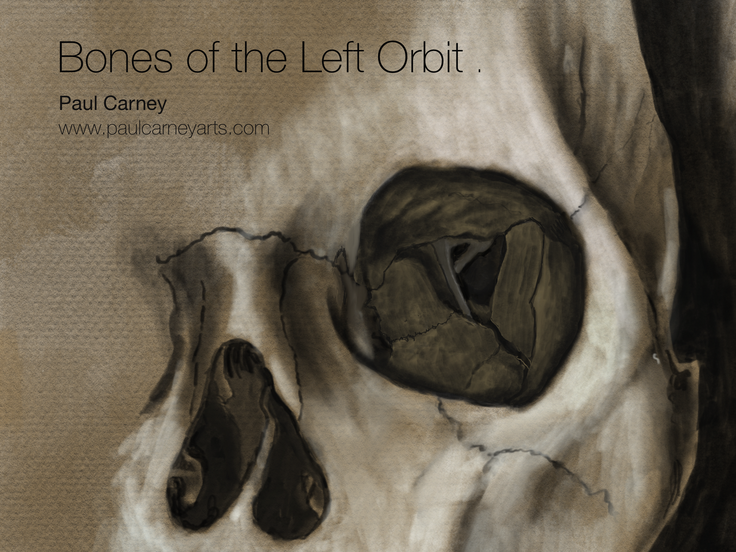 Bones of the left orbit