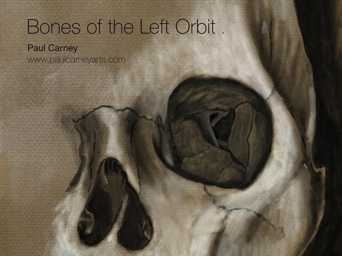 Bones of the left orbit
