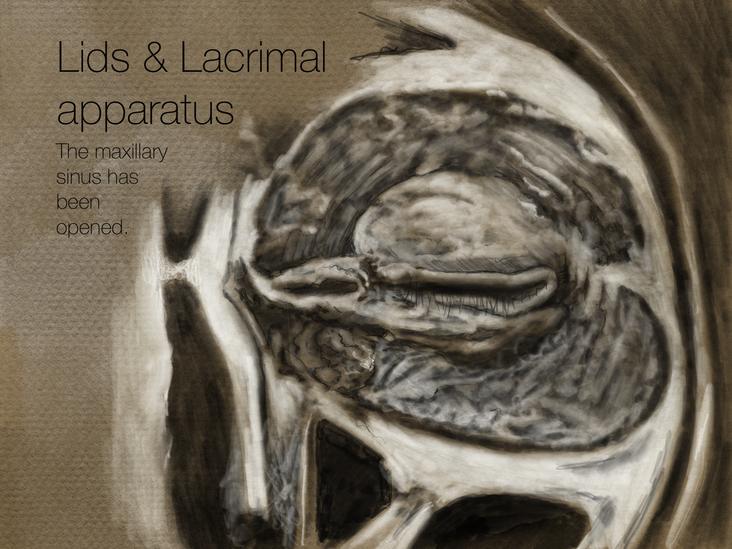 Lids & Lacrimal apparatus