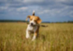 Ryedale Dog Field