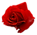 red-rose.png