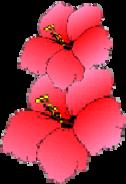 Kimberlie - Hawaiian Hila Parties
