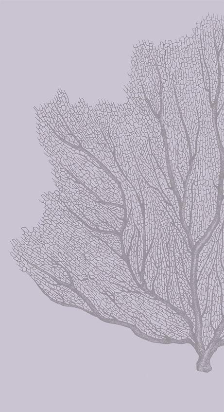 white bg coralAsset 14_4x-100.jpg