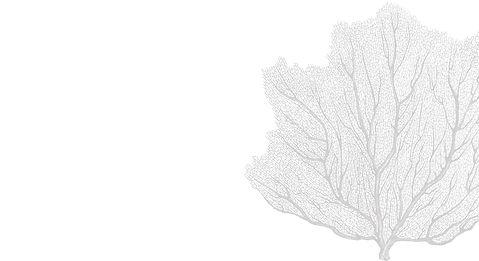 white bg coralAsset 22_4x-100.jpg