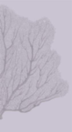 white bg coralAsset 12_4x-100.jpg