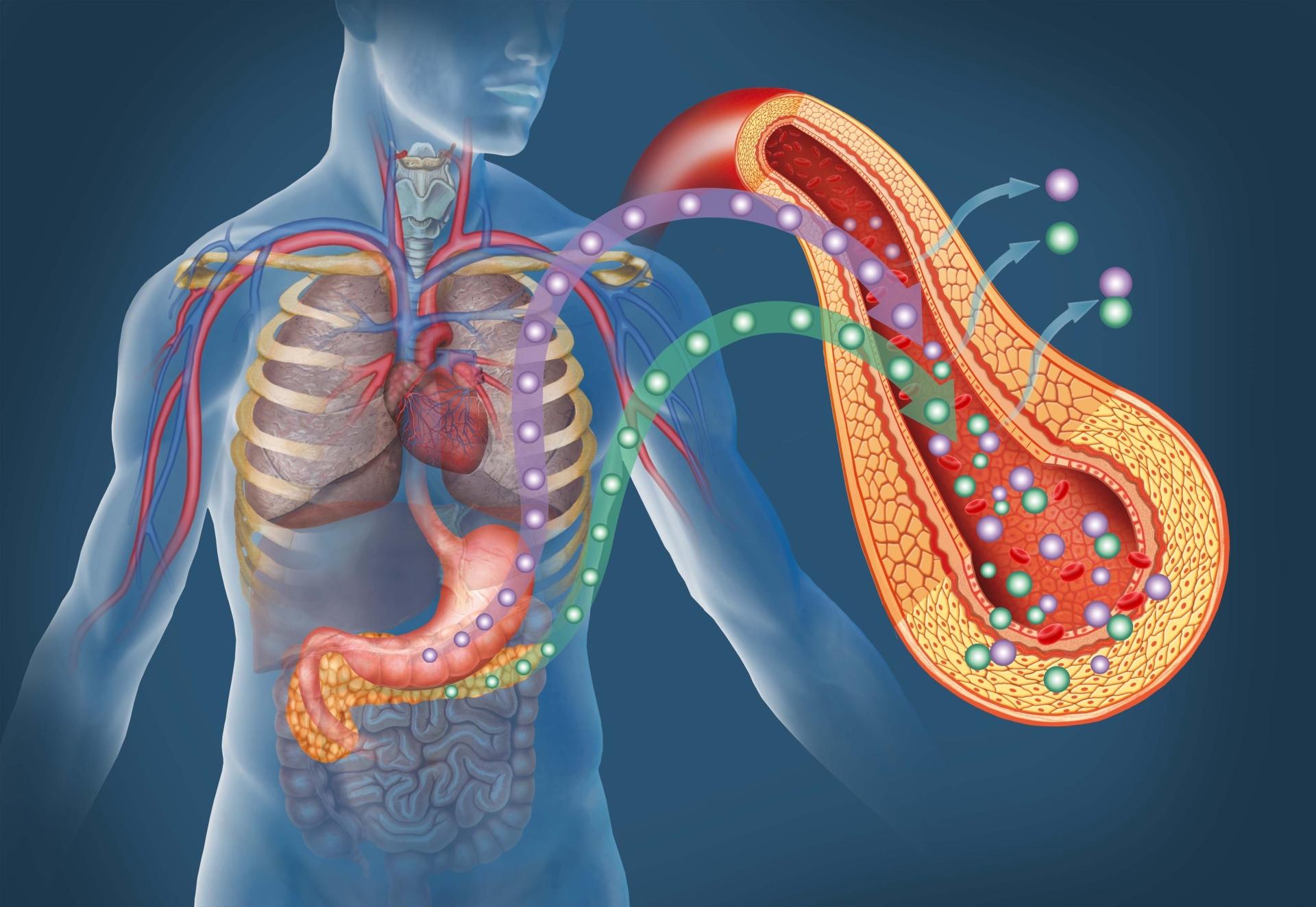 Leber und Bauchspeicheldrüse