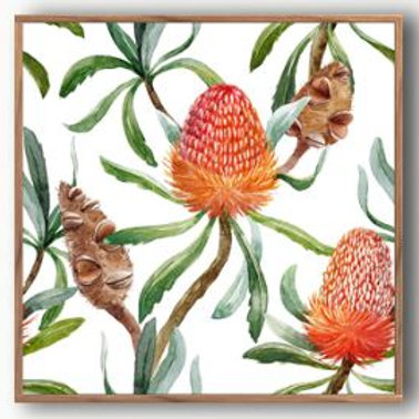 Floating Frame, Stunning Banksia with natural timber frame 100x100