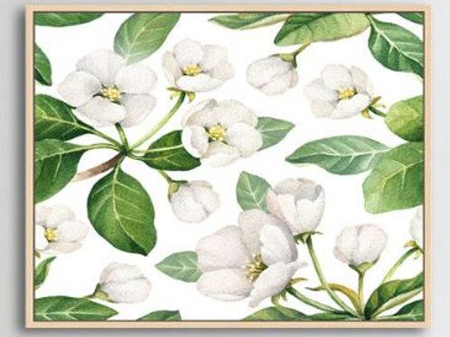 Floating Frame, White Jasmine canvas print with natural frame