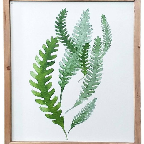 Fern Study Collection Framed prints
