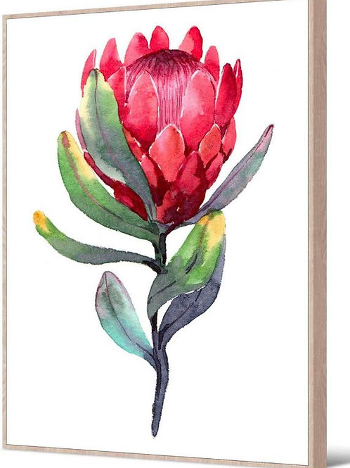 Floating Frame, Red Protea with natural frame, 80 x 100