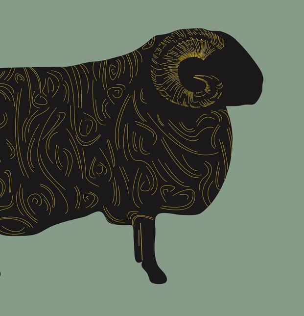 Wool Week Window Image