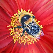 Bumblebee drawing