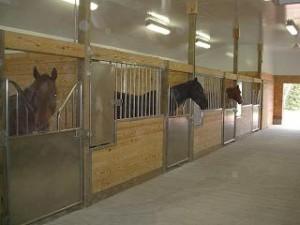 Prochnow horses 300x225
