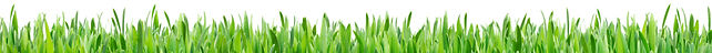 SMPS-Grass-Sideview-646.jpg