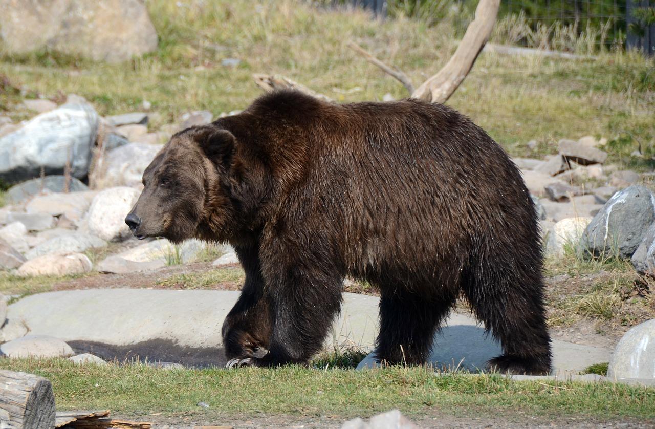 bear-62014_1280.jpg