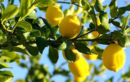 Best-Fertilizer-for-Citrus-Trees.jpg