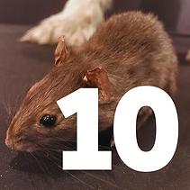 10 December - rat tile 1.png