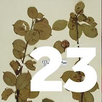 23 December - Apples tile 2.png