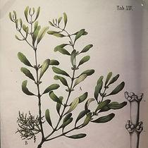0 December - Mistletoe Tile