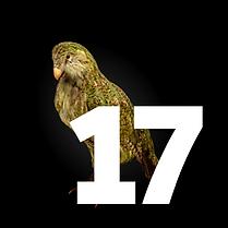 17 December - Kakapo Tile.png