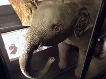 1 December baby-elephant.jpg