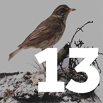 13 December - Bird Watching Tile.png