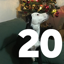 20 December - Therapy Dog Tile.png